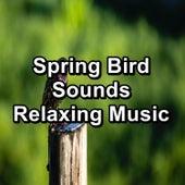 Spring Bird Sounds Relaxing Music von Yoga
