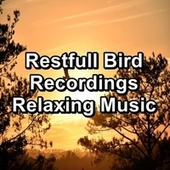 Restfull Bird Recordings Relaxing Music by Yoga Music