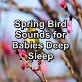 Spring Bird Sounds for Babies Deep Sleep by Spa Relax Music