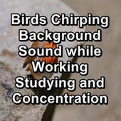 Birds Chirping Background Sound while Working Studying and Concentration von Yoga Shala