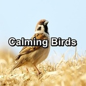 Calming Birds von Yoga Tribe