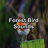 Forest Bird Sounds von Nature Sounds for Sleep and Relaxation