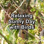 Relaxing Sunny Day with Birds von Yoga Studio