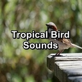 Tropical Bird Sounds by S.P.A