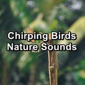 Chirping Birds Nature Sounds de Sleep Sounds