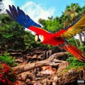 Wild Parrots by Diversify