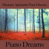 Musique apaisante pour oiseaux: piano dreams - la meilleure musique by Johannes Eichenauer