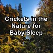 Crickets in the Nature for Baby Sleep de Musica Relajante