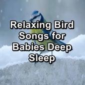 Relaxing Bird Songs for Babies Deep Sleep de Musica Relajante