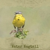 Water Wagtail von Harold Melvin George Beverly Shea