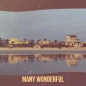 Many Wonderful de Various Artists