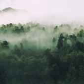 Forests by Julia Cassata