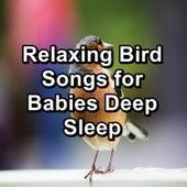 Relaxing Bird Songs for Babies Deep Sleep von Yoga Flow