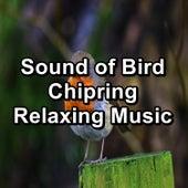 Sound of Bird Chipring Relaxing Music de Thunderstorm Sleep