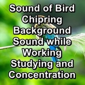 Sound of Bird Chipring Background Sound while Working Studying and Concentration von Yoga Music