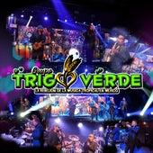 Trigo Verde Desde Casa (En Vivo) von Grupo Trigo Verde
