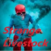Strange Livestock by Monastat 7, Primitive Man, Revocation, UNKIND, MYRKUR