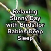 Relaxing Sunny Day with Birds for Babies Deep Sleep de Musica Relajante