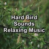 Hard Bird Sounds Relaxing Music by Bird Sounds