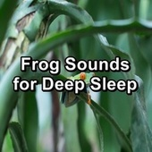 Frog Sounds for Deep Sleep de Musica Relajante