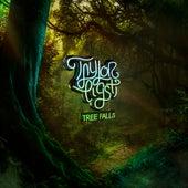 Tree Falls by Taylor Eigsti