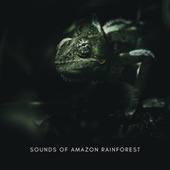 Sounds Of Amazon Rainforest von Natural Sample Makers