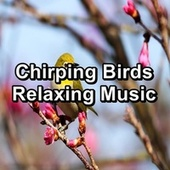 Chirping Birds Relaxing Music by Spa Music (1)