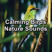 Calming Birds Nature Sounds by Spa Relax Music