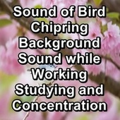Sound of Bird Chipring Background Sound while Working Studying and Concentration by S.P.A
