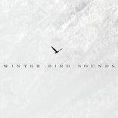 Winter Bird Sounds by Bird Sounds