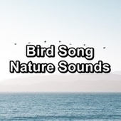 Bird Song Nature Sounds by Spa Music (1)