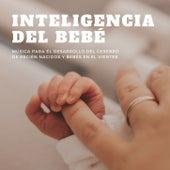 Inteligencia del Bebé: Música para el Desarrollo del Cerebro de Recién Nacidos y Bebés en el Vientre by Canciones Infantiles
