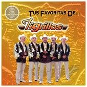 Tus favorita de... by Los Tigrillos