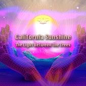 The Light Between the Trees von California Sunshine