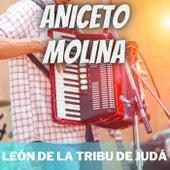 León de la Tribu de Judá de Aniceto Molina