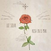 Rosa en el Mar de Luz Solar