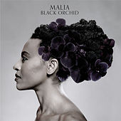 Black Orchid by Malia