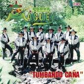 Tumbando Caña de Banda Maguey