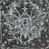 Cicada by Parade