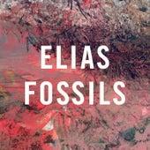 Fossils von Elias
