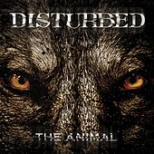 The Animal de Disturbed