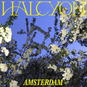 Amsterdam by Halcyon