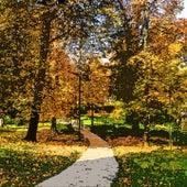 Forest Spirits von Joan Baez