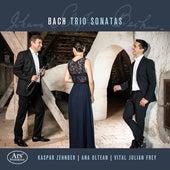 J.S. Bach, C.P.E. Bach & Goldberg: Chamber Works von Ana Oltean
