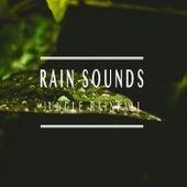 Jungle Rainfall by Rain Sounds (2)