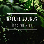 Into the Wild von Nature Sounds (1)