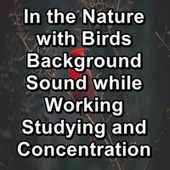 In the Nature with Birds Background Sound while Working Studying and Concentration von Nature Sounds (1)