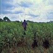 El señor de los granos by Doble A