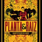 Manifestação do Amor de Planta E Raiz