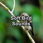 Soft Bird Sounds by Meditation Spa
